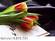 Тюльпаны на книге. Стоковое фото, фотограф Анастасия Кунденкова / Фотобанк Лори