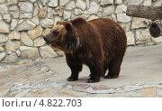 Медведь бурый. Стоковое фото, фотограф Шумов Евгений Владимирович / Фотобанк Лори