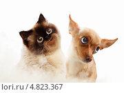 Купить «Портрет смешных кота и пса», фото № 4823367, снято 23 марта 2019 г. (c) Sergey Nivens / Фотобанк Лори