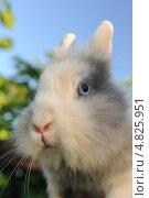 Милый пушистый кролик. Стоковое фото, фотограф Digifuture / Фотобанк Лори