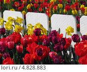 Тюльпаны. Стоковое фото, фотограф Константин Саночкин / Фотобанк Лори