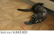 Купить «Игривая кошка», видеоролик № 4843803, снято 8 июля 2013 г. (c) Игорь Жоров / Фотобанк Лори
