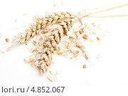 Купить «Пшеничные колосья на белом фоне», фото № 4852067, снято 15 июля 2013 г. (c) Алексей Букреев / Фотобанк Лори