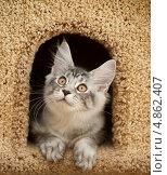 Котенок выглядывает из домика. Стоковое фото, фотограф Бутинова Елена / Фотобанк Лори
