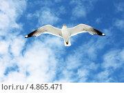 Летящая чайка. Стоковое фото, фотограф Олег Соловьев / Фотобанк Лори