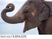 Тайский слон на фоне моря. Стоковое фото, фотограф Роман Кокорев / Фотобанк Лори