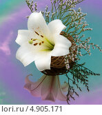 Купить «Белая лилия в плетёной корзинке с отражением в зеркале», фото № 4905171, снято 27 июля 2013 г. (c) Елена Силкова / Фотобанк Лори