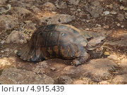 Купить «Черепаха», фото № 4915439, снято 27 мая 2013 г. (c) Хименков Николай / Фотобанк Лори