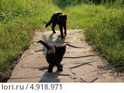 Кошечка и котенок. Стоковое фото, фотограф Амелия Дадабаева / Фотобанк Лори