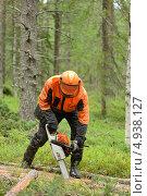 Лесоруб распиливает поваленное дерево. Стоковое фото, фотограф Валерия Попова / Фотобанк Лори