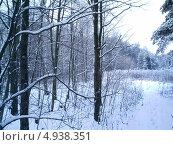 Зимний лес. Стоковое фото, фотограф Вадим Беляев / Фотобанк Лори