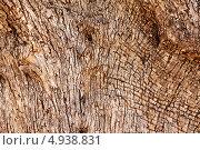 Купить «Текстура коры старой оливы», фото № 4938831, снято 30 мая 2013 г. (c) Лукиянова Наталья / Фотобанк Лори