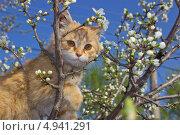 Кот на цветущем дереве. Стоковое фото, фотограф Дмитрий Негру / Фотобанк Лори