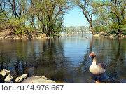Озеро, заповедник Аскания-Нова, Украина. Стоковое фото, фотограф Наталия Тихонова / Фотобанк Лори