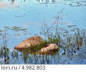 Купить «Камни на мелководье в окружении водных растений», фото № 4982803, снято 14 августа 2013 г. (c) Самойлова Екатерина / Фотобанк Лори