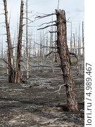 Купить «Мертвый лес, Большое трещинное Толбачинское извержение. Камчатка», фото № 4989467, снято 27 июля 2013 г. (c) А. А. Пирагис / Фотобанк Лори