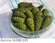 Молодые зеленые сосновые шишки в тарелке. Стоковое фото, фотограф Роман Коваленко / Фотобанк Лори