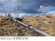 Купить «Хмурое небо над мертвым лесом», фото № 4999519, снято 14 августа 2013 г. (c) Валерий Александрович / Фотобанк Лори