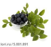 Купить «Ветка и ягоды черники в миске», фото № 5001891, снято 11 июля 2011 г. (c) Natalja Stotika / Фотобанк Лори