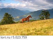 Купить «Лошадь в горах», фото № 5023759, снято 23 августа 2013 г. (c) Эдуард Кислинский / Фотобанк Лори