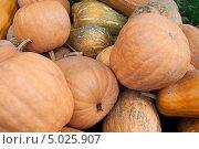 Купить «Оранжевые тыквы, фон», фото № 5025907, снято 2 октября 2011 г. (c) Наталья Двухимённая / Фотобанк Лори