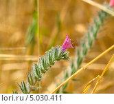 Купить «Придорожная трава», фото № 5030411, снято 26 апреля 2012 г. (c) Сергей Слозин / Фотобанк Лори