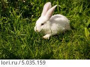 Крольчонок на зелёной траве. Стоковое фото, фотограф Александра Задохина / Фотобанк Лори