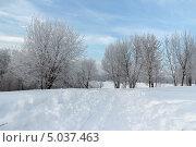 Пейзаж с деревьями в инее и лыжней зимнем парке (2013 год). Стоковое фото, фотограф Горшков Игорь / Фотобанк Лори