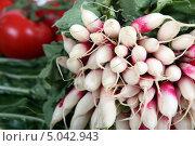 Купить «Связка редиса», фото № 5042943, снято 1 июля 2010 г. (c) Phovoir Images / Фотобанк Лори
