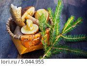 Купить «Грибы в лукошке и еловая ветка», фото № 5044955, снято 11 октября 2012 г. (c) ElenArt / Фотобанк Лори