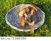 Купить «Грибы в плетеной корзине на траве», фото № 5044959, снято 11 октября 2012 г. (c) ElenArt / Фотобанк Лори