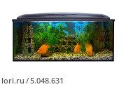 Купить «Аквариум с большими рыбами, белый фон», фото № 5048631, снято 14 августа 2013 г. (c) Евгений Ткачёв / Фотобанк Лори