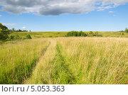 Купить «Проселочная дорога в поле», эксклюзивное фото № 5053363, снято 17 августа 2013 г. (c) Елена Коромыслова / Фотобанк Лори