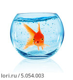 Купить «Золотая рыбка в круглом аквариуме», фото № 5054003, снято 8 декабря 2018 г. (c) Андрей Армягов / Фотобанк Лори