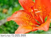 После дождя. Стоковое фото, фотограф Алексей Леонтьев / Фотобанк Лори