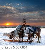 Купить «Северные олени в упряжке на фоне заката зимой», фото № 5057851, снято 25 февраля 2012 г. (c) Владимир Мельников / Фотобанк Лори
