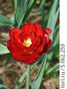 Красный огненный цветок. Стоковое фото, фотограф Просенкова Наталья / Фотобанк Лори