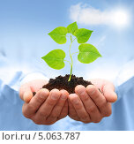 Зеленый росток в руках мужчины. Концепция экологии. Стоковое фото, фотограф Валентина Разумова / Фотобанк Лори