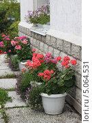 Купить «Садовая герань в горшках», фото № 5064531, снято 17 сентября 2013 г. (c) Мария Николаева / Фотобанк Лори