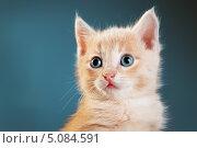 Купить «Рыжий котенок», фото № 5084591, снято 8 мая 2013 г. (c) Типляшина Евгения / Фотобанк Лори