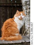 Рыжая кошка. Стоковое фото, фотограф Александр Хорхордин / Фотобанк Лори