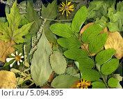 Фон из сухих осенних листьев. Стоковое фото, фотограф V.Ivantsov / Фотобанк Лори