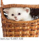 Купить «Белый котенок сидит в корзине», фото № 5097139, снято 13 февраля 2013 г. (c) Андрей Кузьмин / Фотобанк Лори