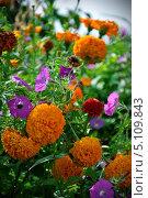 Цветы. Стоковое фото, фотограф Иван Иванов / Фотобанк Лори