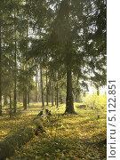 Осенний солнечный день в лесу. Стоковое фото, фотограф Вячеслав Сапрыкин / Фотобанк Лори