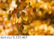 Осенние листья. Стоковое фото, фотограф Наталья Наточина / Фотобанк Лори