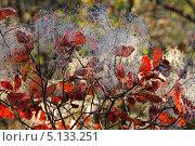 Лициния, Красные листья осени. Стоковое фото, фотограф Влад ЩЧ / Фотобанк Лори