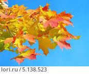 Осенние листья. Стоковое фото, фотограф Людмила Жмурина / Фотобанк Лори