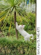 Купить «Кошка точит когти», эксклюзивное фото № 5140471, снято 23 сентября 2013 г. (c) Юрий Морозов / Фотобанк Лори
