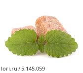 Коричневый тростниковый сахар-рафинад и зеленые листья мяты на белом фоне. Стоковое фото, фотограф Natalja Stotika / Фотобанк Лори